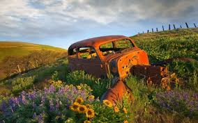 old rusty cars rusty old cars abandoned in a field hd wallpaper