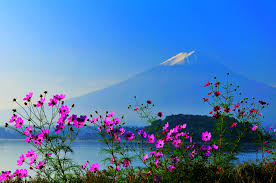 volcano flowers mount fuji japan volcano nature mountains sky lake flowers