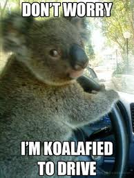 Australia Meme - meanwhile in australia meme google search haha pinterest