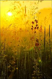 Colors Of Yellow Best 25 Yellow Ideas On Pinterest Color Yellow Yellow Painting
