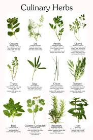 10 Vegetables U0026 Herbs You by Culinary Herb Poster Herbs Gardens And Herbs Garden