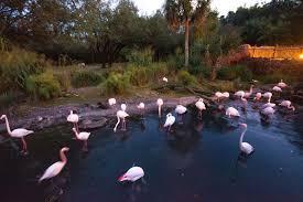 100 animal kingdom lodge 2 bedroom villa floor plan disney