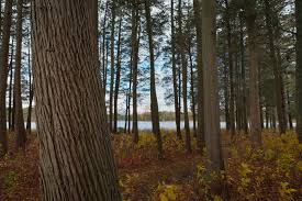 New Jersey forest images Doing it all in new jersey jpg