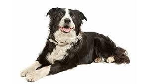 101 dalmatians dog names u0026 disney