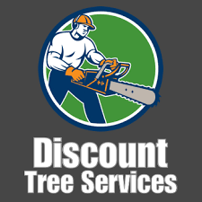 need tree removal in ft lauderdale call 954 289 2150 today