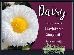 daisy meaning u0026 symbolism flower meanings spiritual meaning and