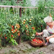 balcony vegetable garden ideas india archives catsandflorals com