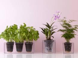 plantes d駱olluantes chambre quelle plante dépolluante est faite pour vous test quiz deco