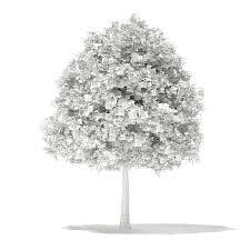 sweetgum tree liquidambar styraciflua 11m 3d model max obj fbx c4d