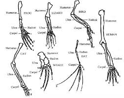 Anatomy And Physiology Glossary Anatomy And Physiology Of Animals Print Version Wikibooks Open
