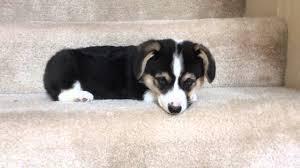 Go Down Stairs by Videos Subthread Rebrn Com