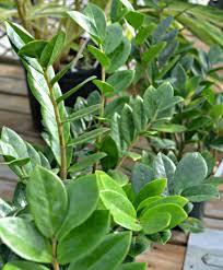 10 great low light houseplants fairview garden center