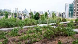 Urban Garden Amsterdam Step Into The Future Of Gardening At Singapore U0027s Edible Garden City