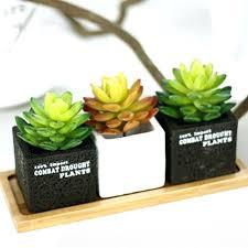 plantes pour bureau plante pour le bureau hyipmonitors info