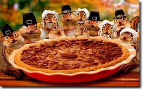 squirrels thanksgiving pie squirrels animals background