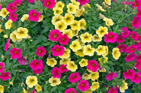 10 best flowers to use in hanging baskets