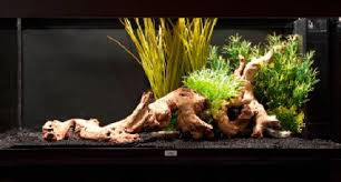 Plants For Aquascaping How To Set Up An Aquarium With Plastic Plants U2014 Practical