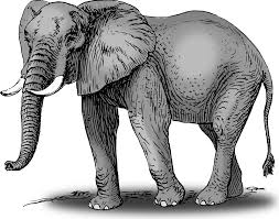 clipart colored elephant