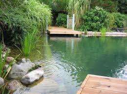 Backyard Swimming Ponds by 463 Best Swimming Ponds Images On Pinterest Natural Swimming