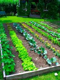 image of ideas vegetable garden layout plans picture small