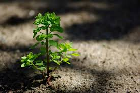 i plants album on imgur