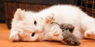 the 10 best cat toys world s best cat litter