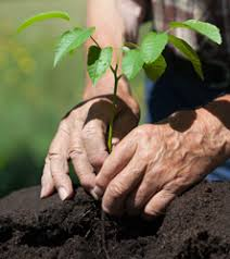 Garden Soil Types - bayer garden soil types and its effect on the growth of your
