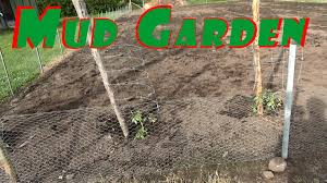 Starting An Organic Vegetable Garden by Planting In The Mud Not The Best Start To The Growing Season 96