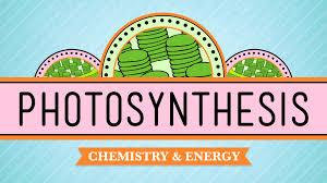 photosynthesis crash course biology 8 youtube