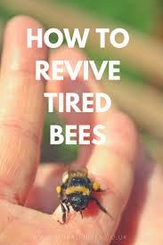 best 25 bee spray ideas on pinterest house bugs keep bees away