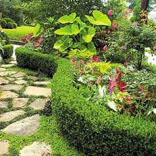 Tropical Plants For Garden - guide to growing tropical plants