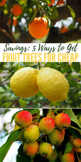 savings 5 ways to get fruit trees for cheap