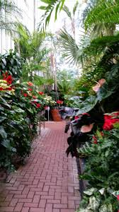 biltmore estate asheville nc tropical plants from the