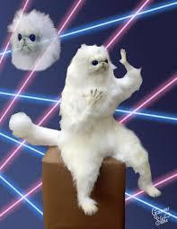 Persian Cat Meme - persian cat room guardian glamour shots imgur