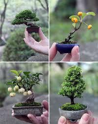 40 smart mini indoor garden ideas garden ideas minis and indoor