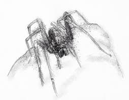 artist sean briggs producing a sketch a day house spider drawing