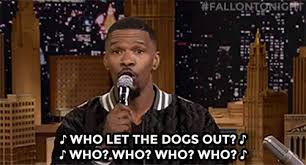 Who Let The Dogs Out Meme - who let the dogs out meme gifs tenor
