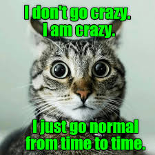 Crazy Cat Memes - normal is just a setting on the dryer lolcats lol cat memes