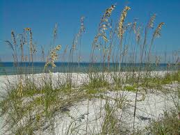 Where Is Merritt Island Florida On The Map by Caladesi Island Trail Florida Hikes
