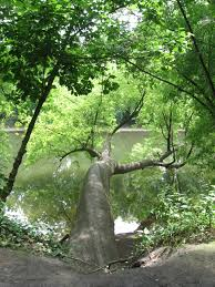 native plants in pennsylvania schuylkill river watershed the sanguine root