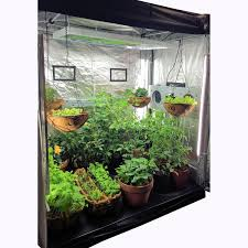 indoor herbs to grow indoor greenhouse archives ecogardenhouse