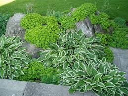 Rock Garden Steps by Garden Rock U0026 Ground Covers Plants Natural Stone Landscaping