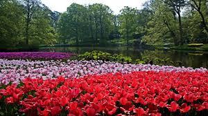 keukenhof flower gardens keukenhof tag wallpapers holland tulips gardens park spring