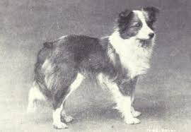 australian shepherd upkeep german shepherd then and now http dogbehaviorscience wordpress