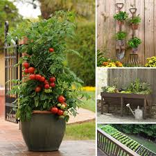 grow your own salad in containers corkys corner