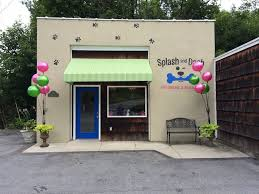 halloween city monroe mi splash and dash groomerie u0026 boutique dog grooming monroe ny