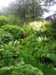 native rainforest plants using native plants in the domestic landscape landscape alaska