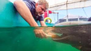 rescued false killer whale to stay at vancouver aquarium with