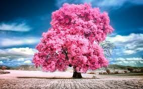 beautiful trees wallpapers on wallpaperget com