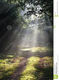 forest glade sunbeams in forest glade stock image image of misty peaceful
